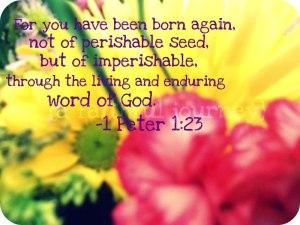 ayat_131113_1 pet 1 23